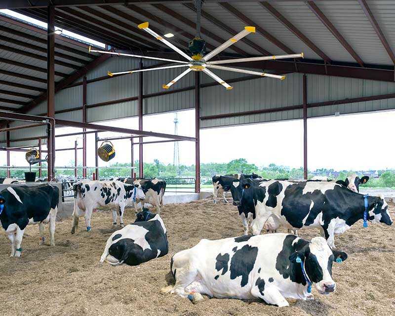 Chăn nuôi, nông nghiệp